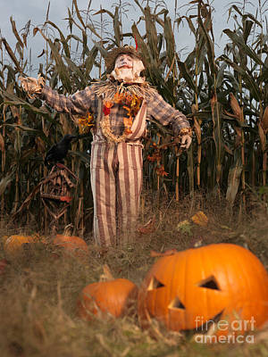 Jack O Lanterns Jackolantern Photograph - Scarecrow In A Corn Field by Oleksiy Maksymenko