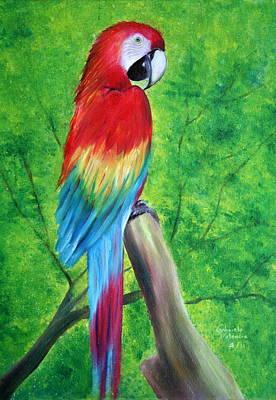 Scarlet Macaw Painting - Scarlet Macaw by Gabriela Valencia