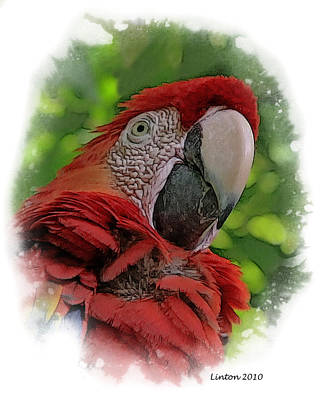 Macaw Digital Art - Scarlet Macaw by Larry Linton