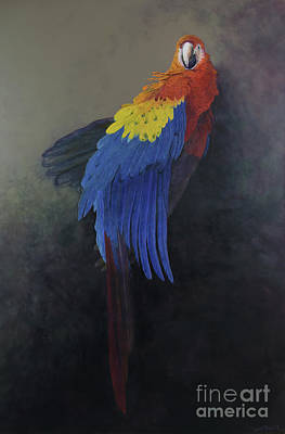 Macaw Wall Art - Painting -  Scarlet Macaw   Three by Odile Kidd