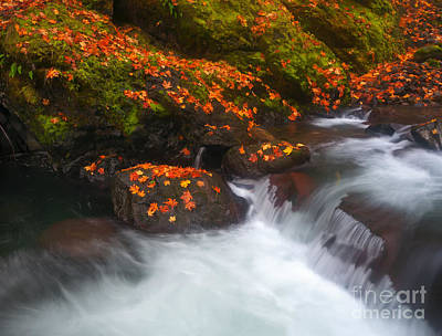 Skate Creek Photograph - Scattered Gold by Mike Dawson
