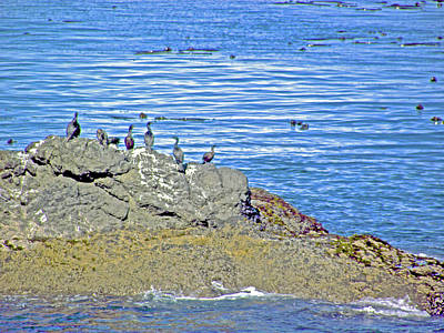 Photograph - Sea Birds On Rocks Offshore In Salt Creek Recreation Area On Olympic Peninsula, Washington by Ruth Hager