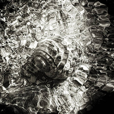 Consumerproduct Mixed Media - Sea Creatures, The Shell #1 by Valentin Gladyshev