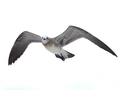 Photograph - Sea Gull by James Granberry