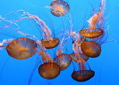 Sea Nettles Ballet 1 Print by Diane Wood