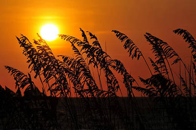 Sea Oats At Sunset Art Print by David Lee Thompson