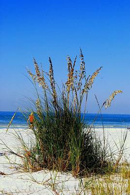 Photograph - Sea Oats by Gary Wonning