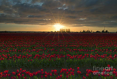 Sunburst Photograph - Sea Of Red by Mike Dawson
