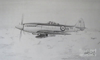 Hornbill Drawing - Seafire Mk17 by Simon Cockett