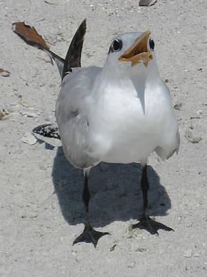 Photograph - Seagull 2 by Brenda Berdnik