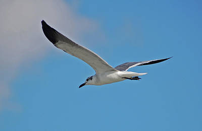 Photograph - 1- Seagull by Joseph Keane