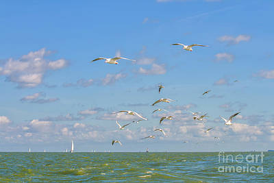 Photograph - Seagulls Above The Ocean by Patricia Hofmeester