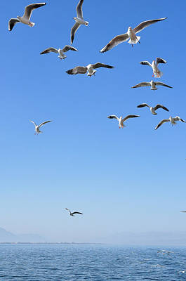 Photograph - Seagulls Above The Sea by Carl Ning