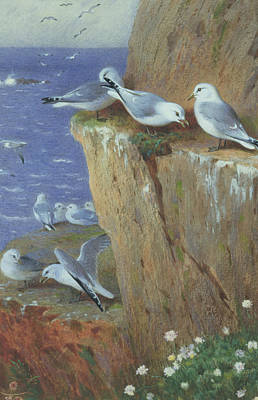Sea Birds Painting - Seagulls by Archibald Thorburn