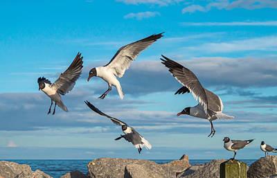 Photograph - Seagulls In Flight by Willard Killough III