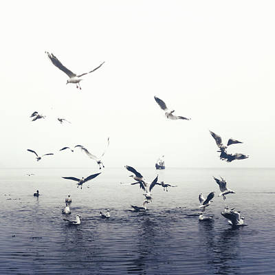 Of Birds Photograph - Seagulls by Joana Kruse