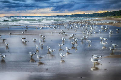 Photograph - Seagulls On The Shore by Christopher Purcell