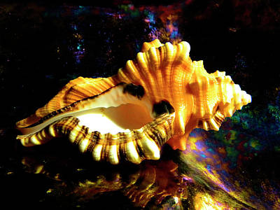Photograph - Seashell Cymatium Lotoium by Frank Wilson