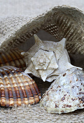Beachcombing Photograph - Seashells by Frank Tschakert