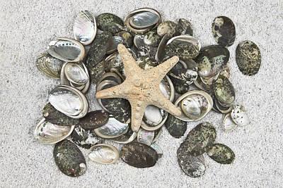 Seashells Print by Joana Kruse