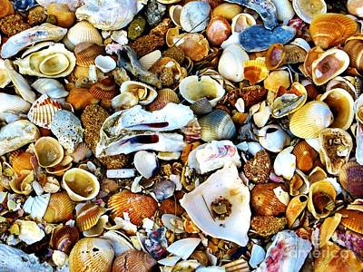 Photograph - Seashells by Tim Townsend
