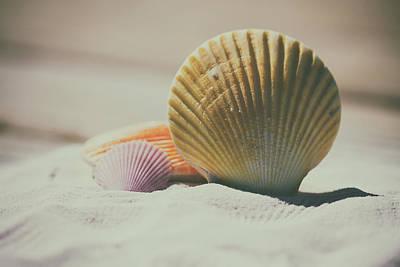Seashore Shells Art Print by Mountain Dreams