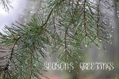 Photograph - Season's Greetings by Jewels Blake Hamrick