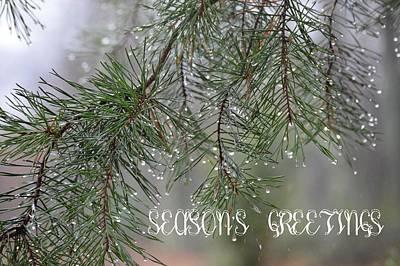 Photograph - Season's Greetings by Jewels Blake Hamrick