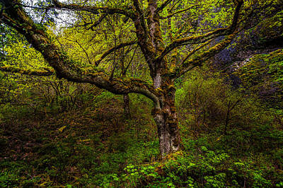Photograph - Secluded Tree by Harry Spitz