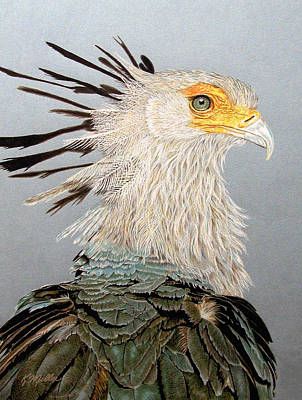 Drawing - Secretary Bird by Kathie Miller