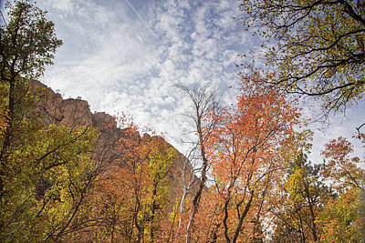 Photograph - Sedona Fall Colors by Kunal Mehra