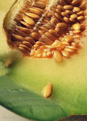 Photograph - Seed by Marija Djedovic