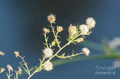Photograph - Seed Pod by Donna Brown