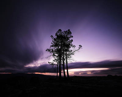 Photograph - Sentinels by Antonio Jorge Nunes