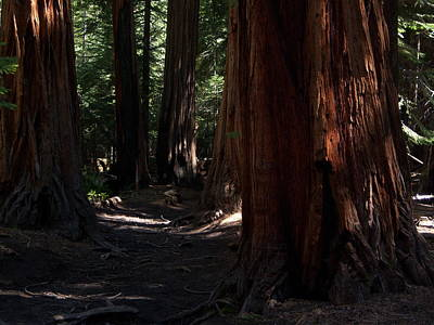 Photograph - Sequoias On Half Dome Trail by Bransen Devey