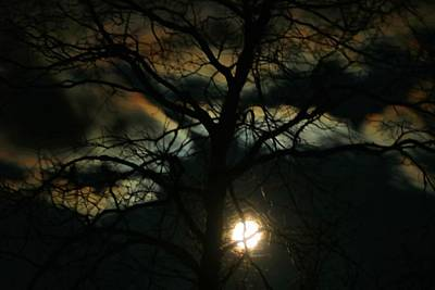 Photograph - Setting Moon by Kathryn Meyer