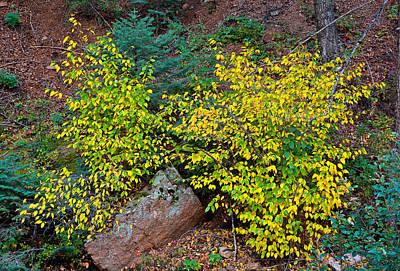Photograph - Seven Falls Flora Study 11  by Robert Meyers-Lussier