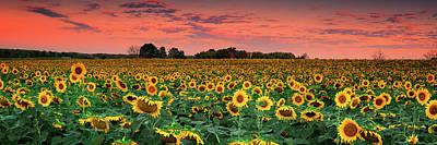 Photograph - Sun Flower Field In Red  by Emmanuel Panagiotakis