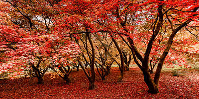 Photograph - Shades Of Autumn by Kelvin Trundle