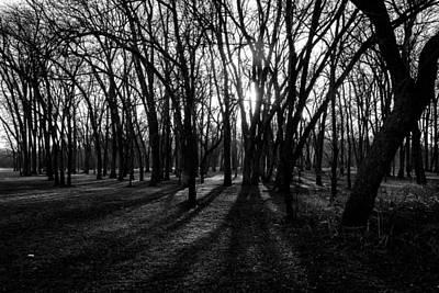 Grateful Dead - Shadows by Dennis Wells