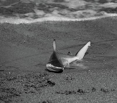 Photograph - Shark Bait by Jenny Regan
