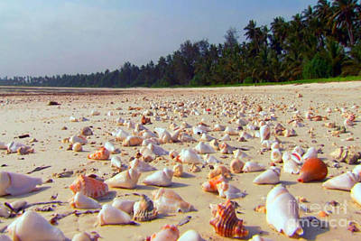 Mixed Media - She Sells Sea Shells At The Sea Shore Seaweed And Sea Shells Beaches Of Zanzibar Tanzania by Navin Joshi