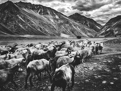 Photograph - Sheep Herd In Mountain Pass - India by Pixabay