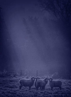 Photograph - Night Watch. Sheep Underhill Vt by George Robinson