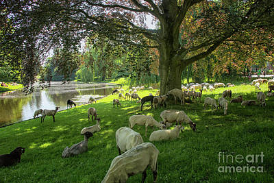 Photograph - Sheepherd In A Park In Groningen, City by Patricia Hofmeester