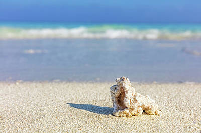 Nobody Photograph - Shell, Coral Reef On Sandy Tropical Beach In Maldives by Michal Bednarek
