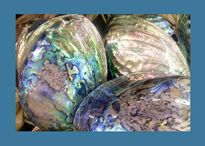 Photograph - Shells - 2 by Carla Parris