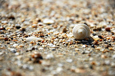 Photograph - Shells by Isaac Nachshon