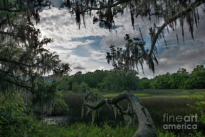 Photograph - Shem Creek Salt Marsh by Dale Powell