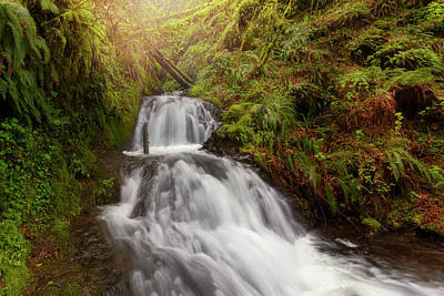 Outdoors Photograph - Shepperd's Dell Falls by David Gn
